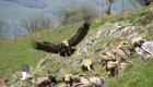 rocher au vautour vallée d'ossau