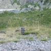 marmotte  artouste